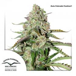 AutoColoradoCookies-DutchPassion-ElCultivar-Growshop