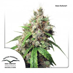 AutoEuforia-DutchPassion-ElCultivar-Growshop