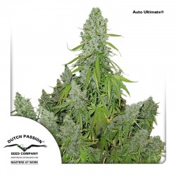 AutoUltimate-DutchPassion-ElCultivar-Growshop