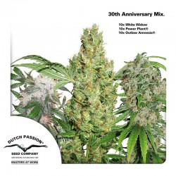 MIX-30-10fem-El-cultivar-Growshop