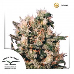 Euforia-Reg-DutchPassion-ElCultivar-Growshop
