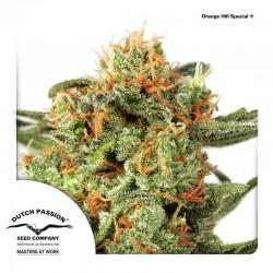 OrangeHillSpecial-Reg-DutchPassion-ElCultivar-Growshop