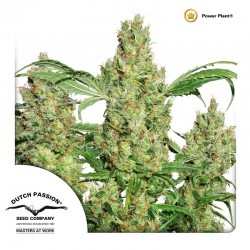 PowerPlant-Reg-DutchPassion-ElCultivar-Growshop
