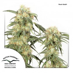 PamirGold-DutchPassion-ElCultivar-Growshop