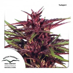Twilight-DutchPassion-ElCultivar-Growshop.jpg