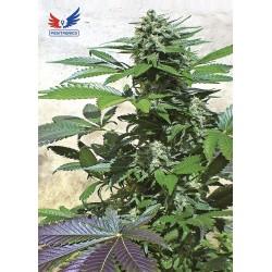 BlueRhino-Positronics-ElCultivar-growshop.jpg