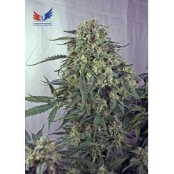 Caramelice-Positronics-ElCultivar-growshop.jpg