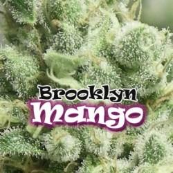 BrooklynMango-DrUnderground-ElCultivar-growshop.jpg
