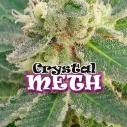 CrystalM.E.T.H.-DrUnderground-elcultivar-growshop.jpg