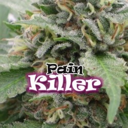 Painkiller-DrUdergrowun-ElCultivar-growshop.jpg
