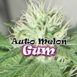 AutoMelonGum-DrUnderground-ElCultivar-growshop.jpg