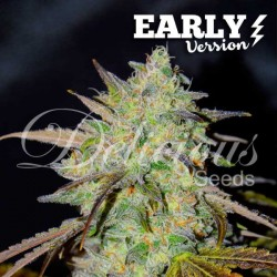 MARMALATEEARLY-DELICIOUS-ELCULTIVAR-GROWSHOP.jpg