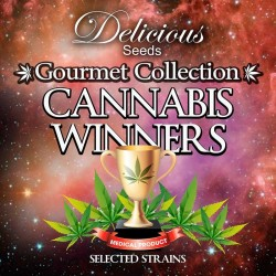 CANNABISWINNERS-DELICIOUS-ELCULTIVAR-GROWSHOP