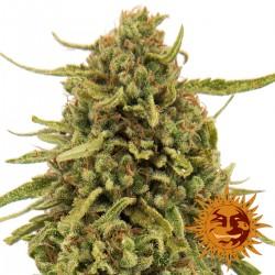 WidowRemedy-Regular-BarneysFarm-ElCultivar-growshop.jpg