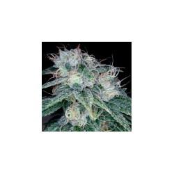 SourDiesel-ReservaPrivadaDNA-ElCultivar-growshop.jpg