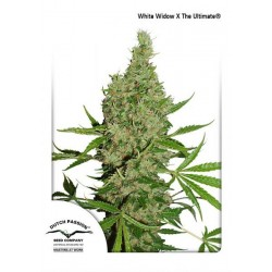 WhiteWidowTheUltimate-Reg-DutchPassion-Elcultivar-growshop.jpg