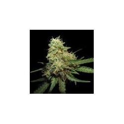 RKS-GrowYourOwnDNA-ElCultivar-growshop.jpg