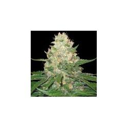 Rocklock-GrowYourOwnDNA-ElCultivar-growshop.jpg