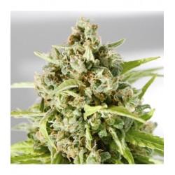 MrMotherEarth-MrHide-ElCultivar-growshop