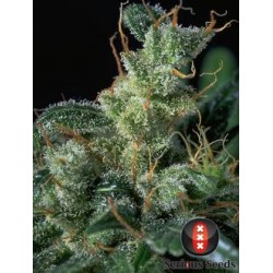 KaliMist-Regular-SeriousSeeds-ElCultivar-growshop.jpg