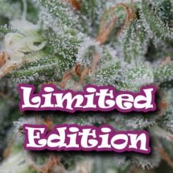 EdicionLimitada-DrUndergroun-Elcultivar-growshop.jpg
