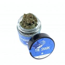 THE SHARK (desde)